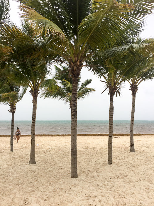 palm trees on beach in Cancun, Mexico