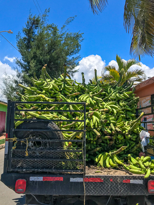 plantains in bed of truck